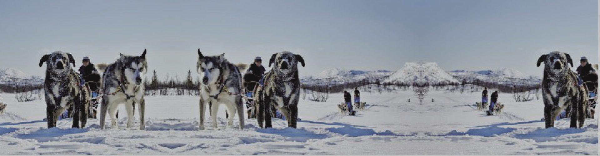 Winterpad, testato nel rigido clima polare