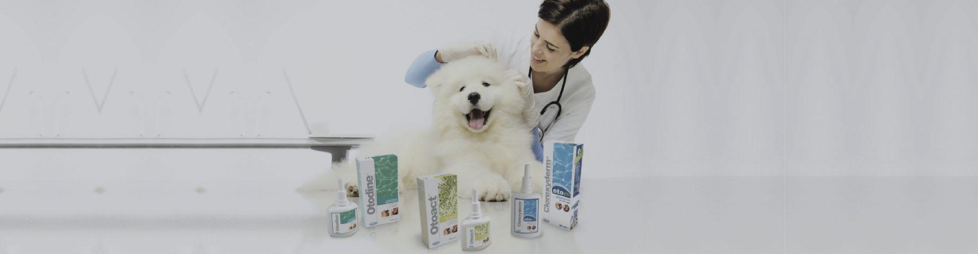 (Italiano) Gli otologici di ICF per il cane e il gatto