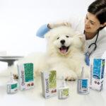 Gli otologici di ICF per il cane e il gatto